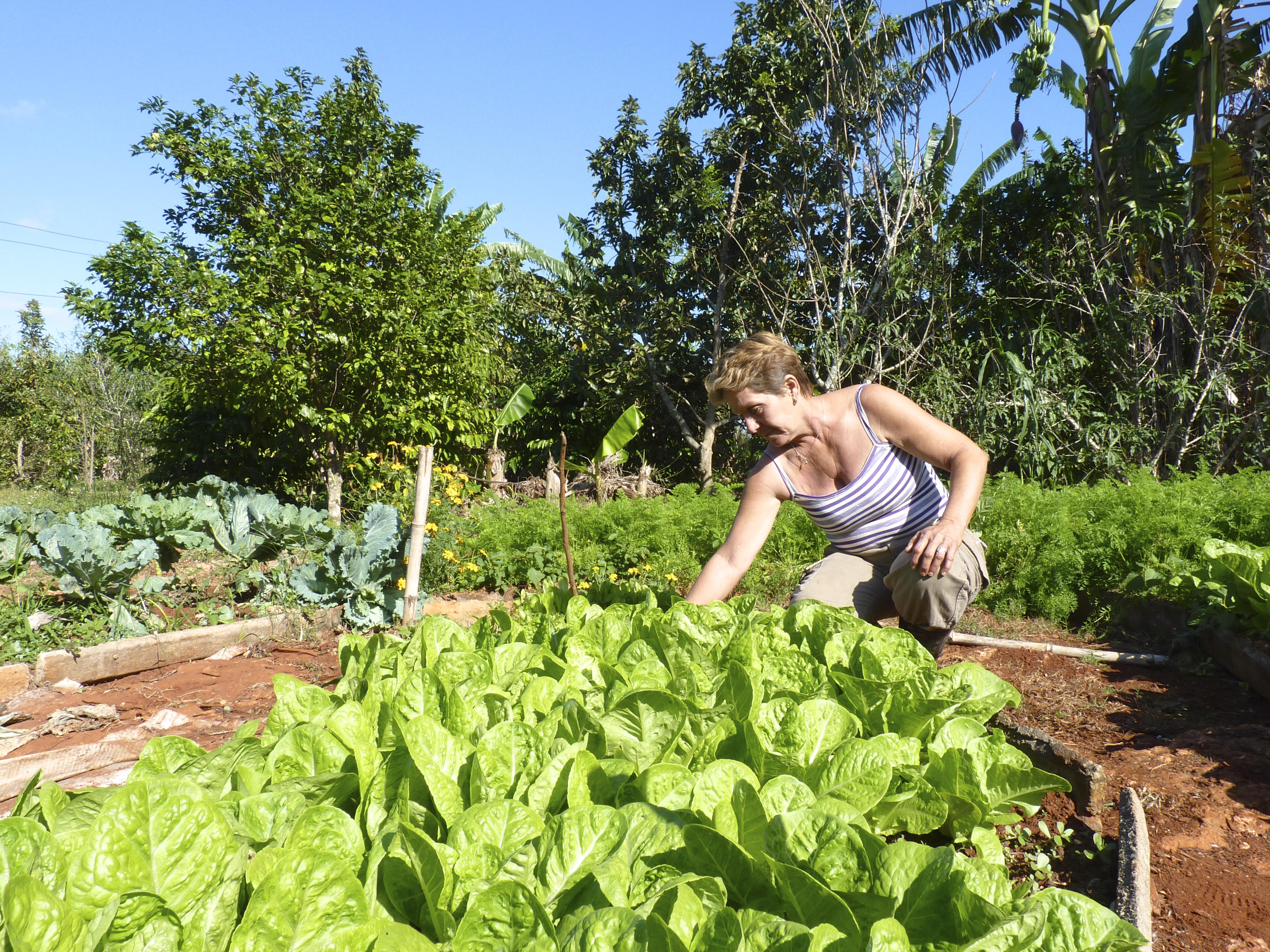 Cuza runs a mixed farm and permaculture demonstrate site with her partner in Matanzas, Cuba. Cuza grows vegetables, raises rabbits and goats, and tends an acre of mixed food forest for fruit and timber production.  Photo Credit - Trina Moyles