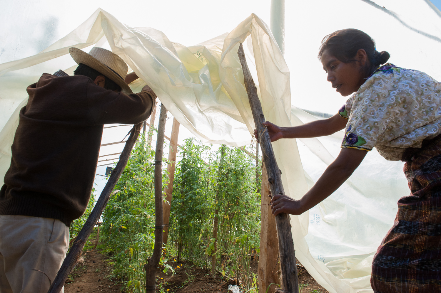 Victoria, a Mam farmer, and her comrade open the greenhouse where they're experimenting with hothouse tomatoes. Victoria lives in the arid highlands of northwestern Guatemala. How are indigenous women using agriculture as a tool to resist economic development projects?  Photo Credit - KJ Dakin