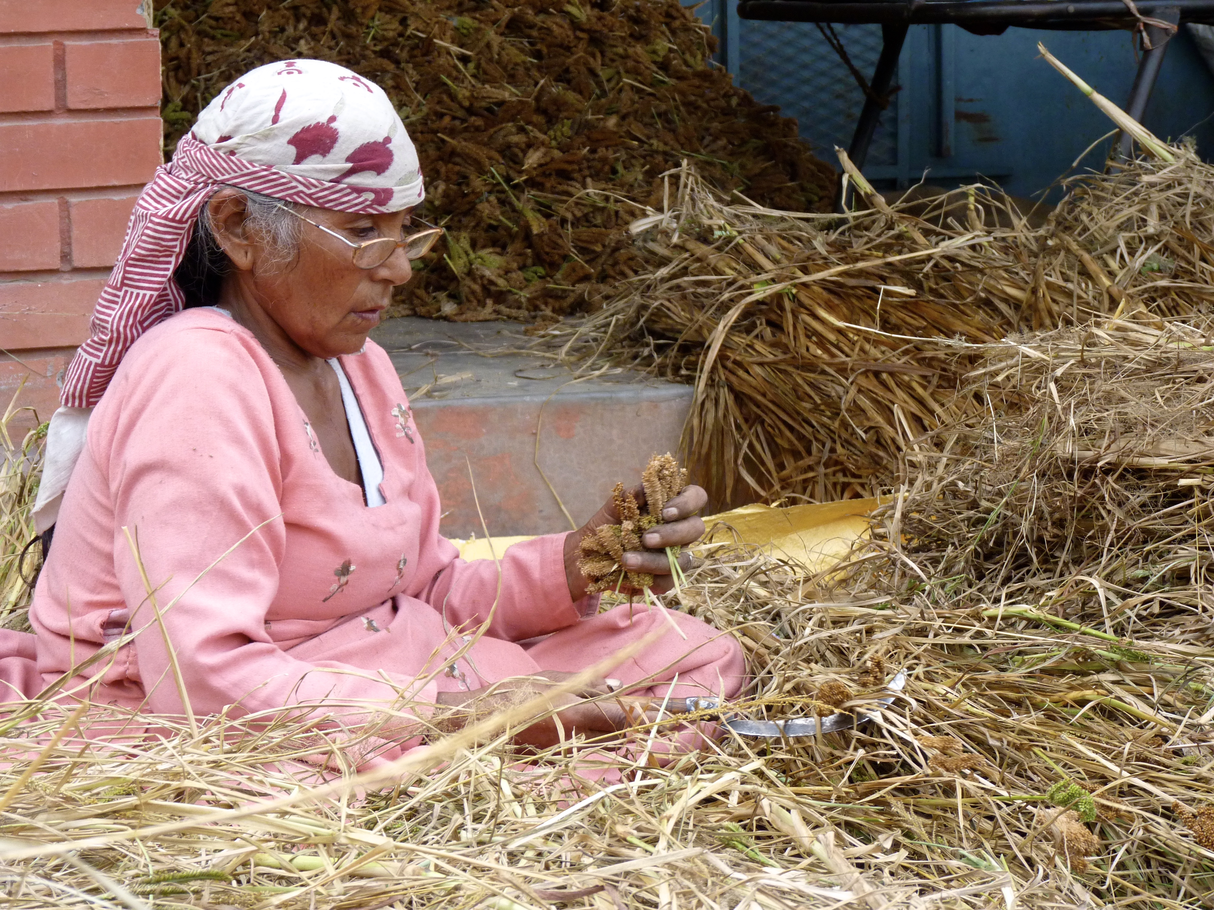 """The woman known as the """"seed sister"""" at Dr. Vandana Shiva's agroecological farm in Dehradun, India, where organizers are cultivating hundreds of traditional varieties of India's """"9 sacred grains"""". Photo Credit - Trina Moyles"""
