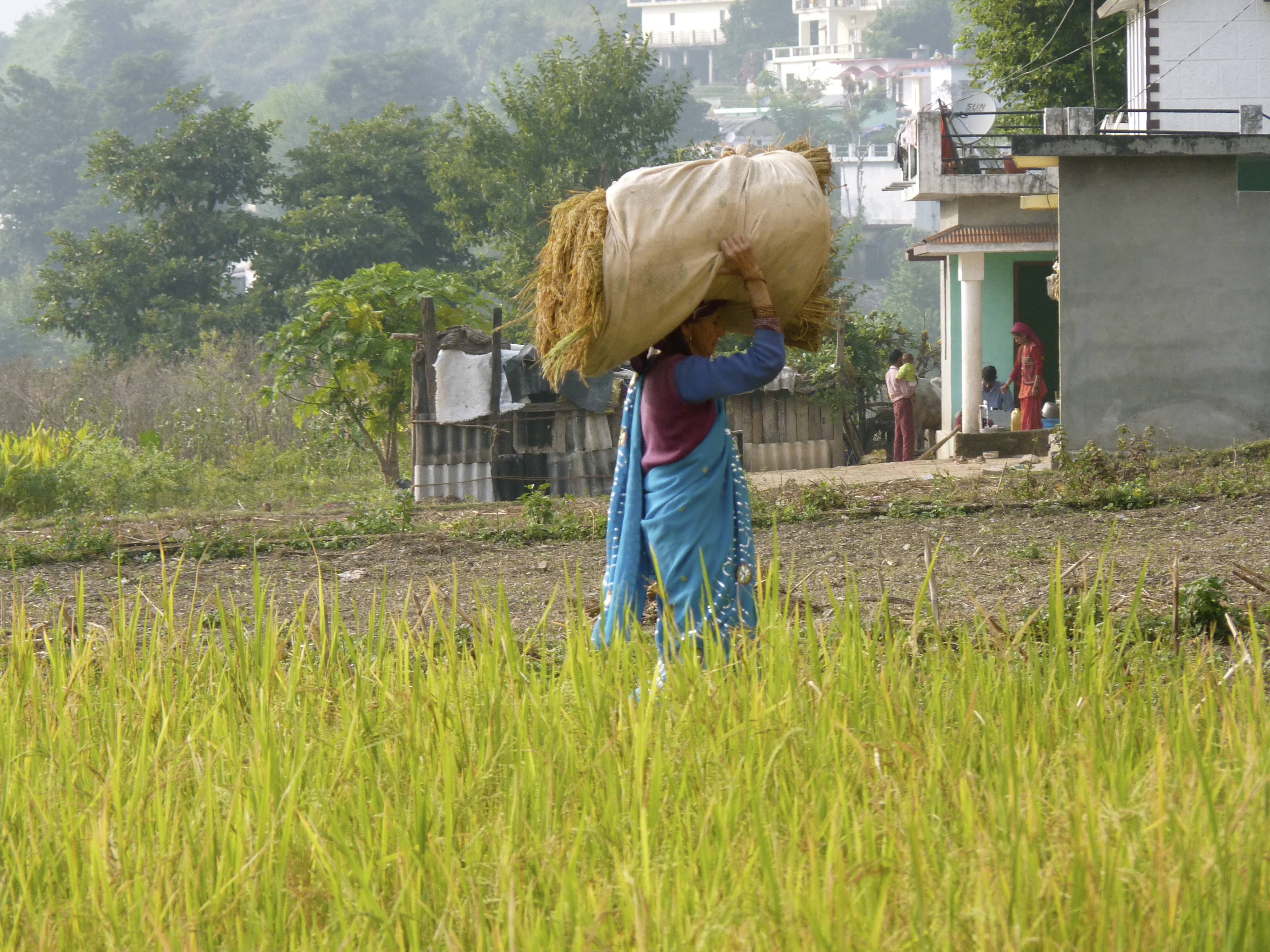 A woman walks through a rice paddy in the Himalayan foothills of northern India. (Photo - Trina Moyles)